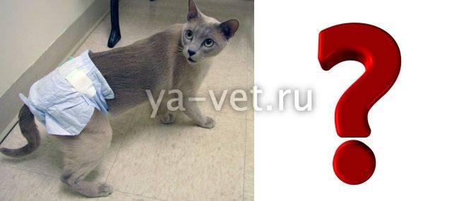 ✅ у кошки понос и недержание кала - ipraktica.ru