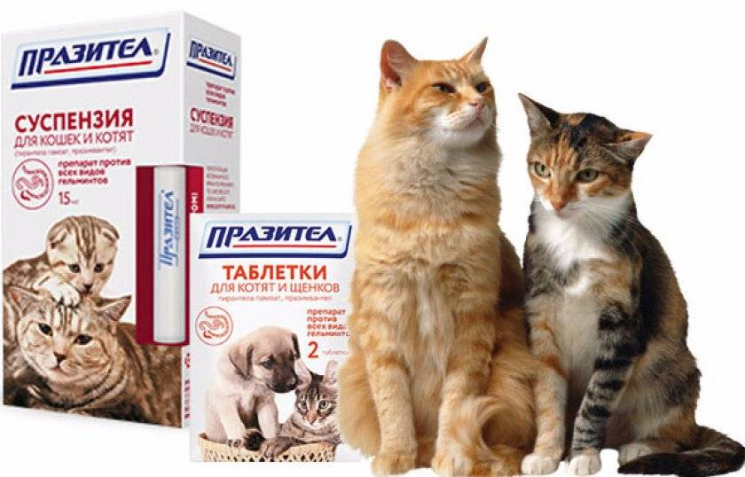 Суспензия празител для кошек: состав против паразитов, инструкция применения, суспензия и таблетки