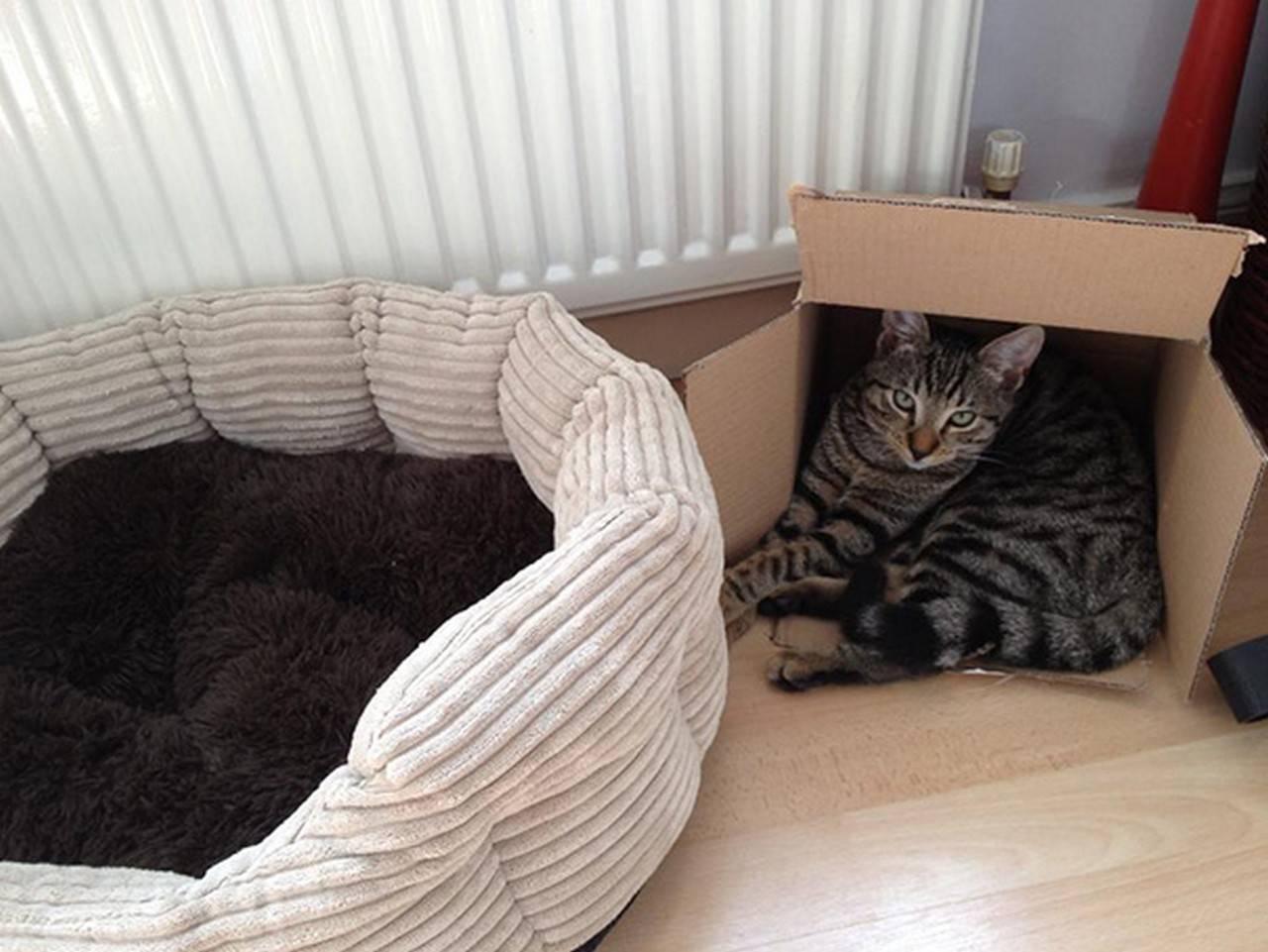 Почему кошкам нравятся пакеты и коробки, из-за чего коты любят в них сидеть и спать?