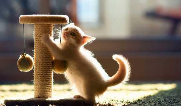 Как сделать игрушку для кота из подручных средств