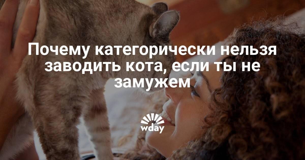 Почему нельзя обнимать и целовать кошек. скрытая опасность или почему нельзя обнимать котов и кошек
