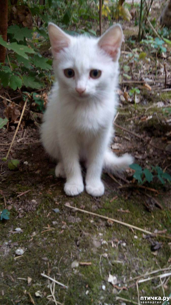 Кот гадит, что делать??? крик о помощи! - запись пользователя анюта (apricus89) в сообществе домашние животные в категории помогите советом - babyblog.ru