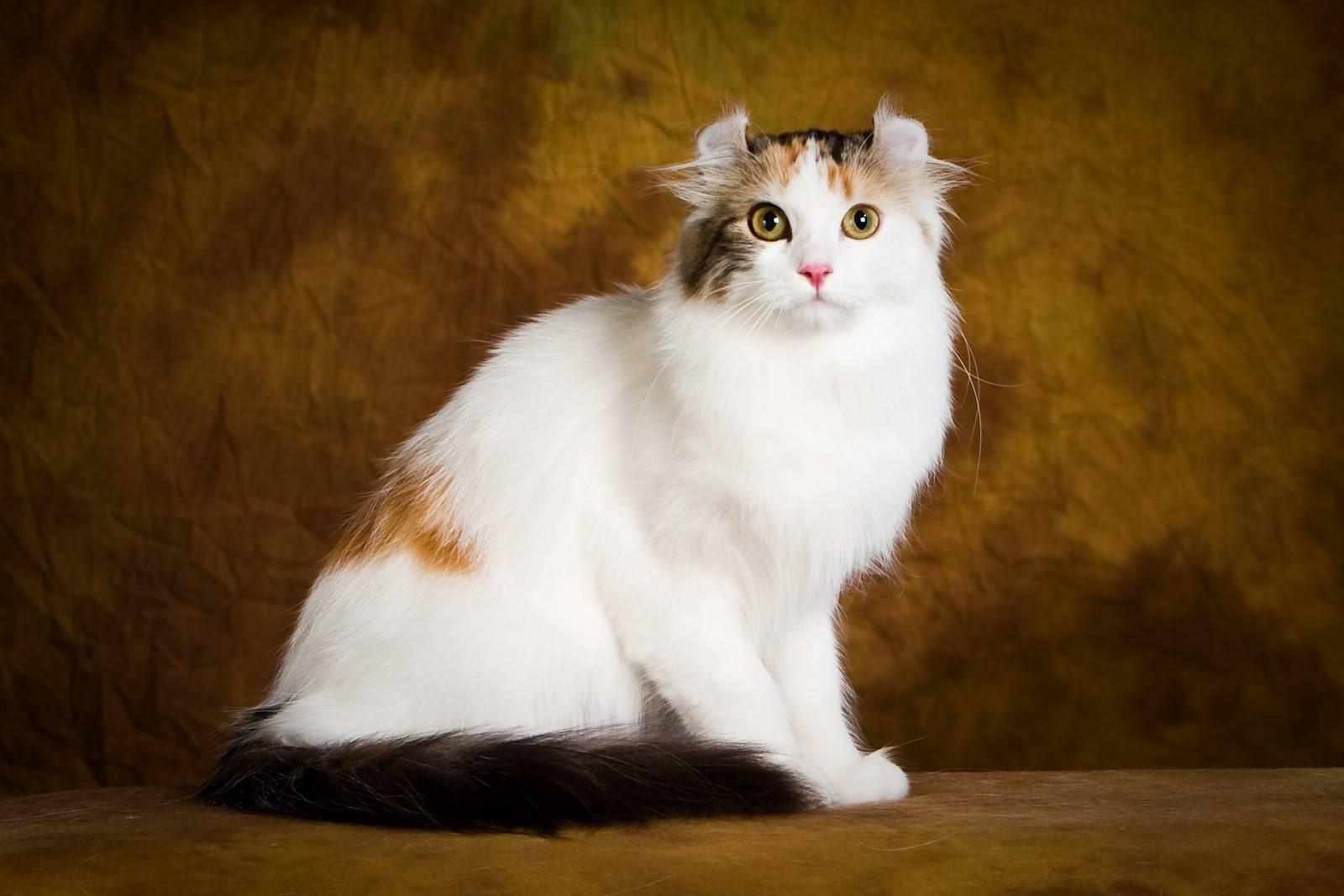 Самые ласковые породы кошек. топ 13 пород (фото и описание)