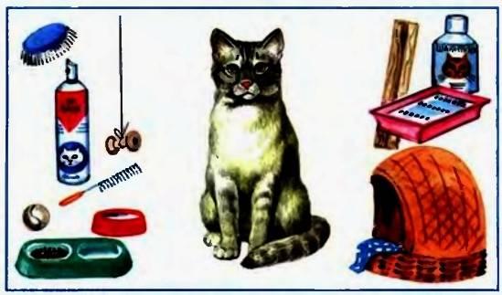 Уход за кошками в домашних условиях