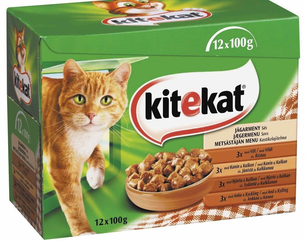 10 лучших кормов для котят