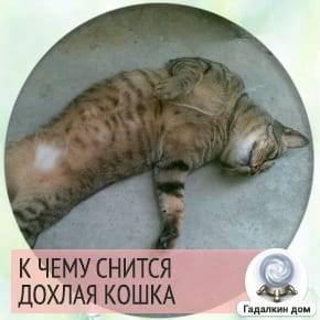 Сонник раненый белый кот. к чему снится раненый белый кот видеть во сне - сонник дома солнца