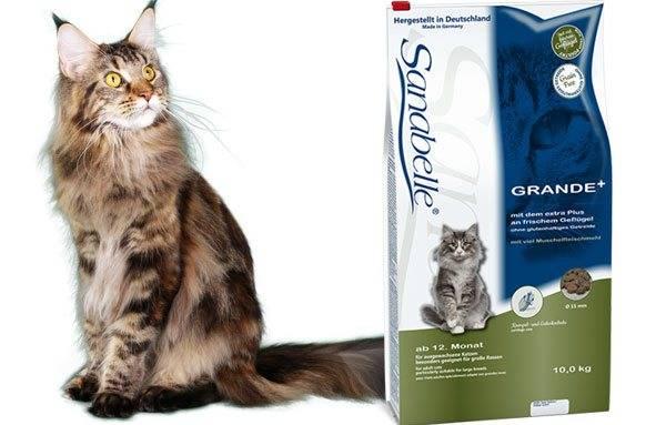Рацион котенка мэйн куна — кормим правильно, чтобы рос здоровым