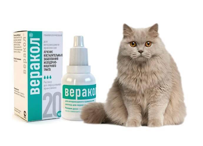Кот блюет – причины, методы диагностики и способы лечения тошноты и рвоты в условиях клиники и дома