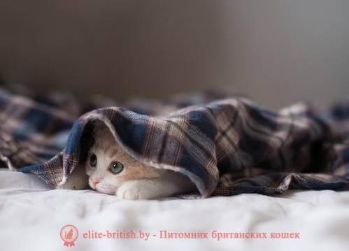 """Адаптация котенка в новом доме - питомник мейн кунов """"volgaland"""""""
