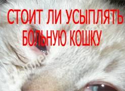 Безболезненное усыпление и кремация животных