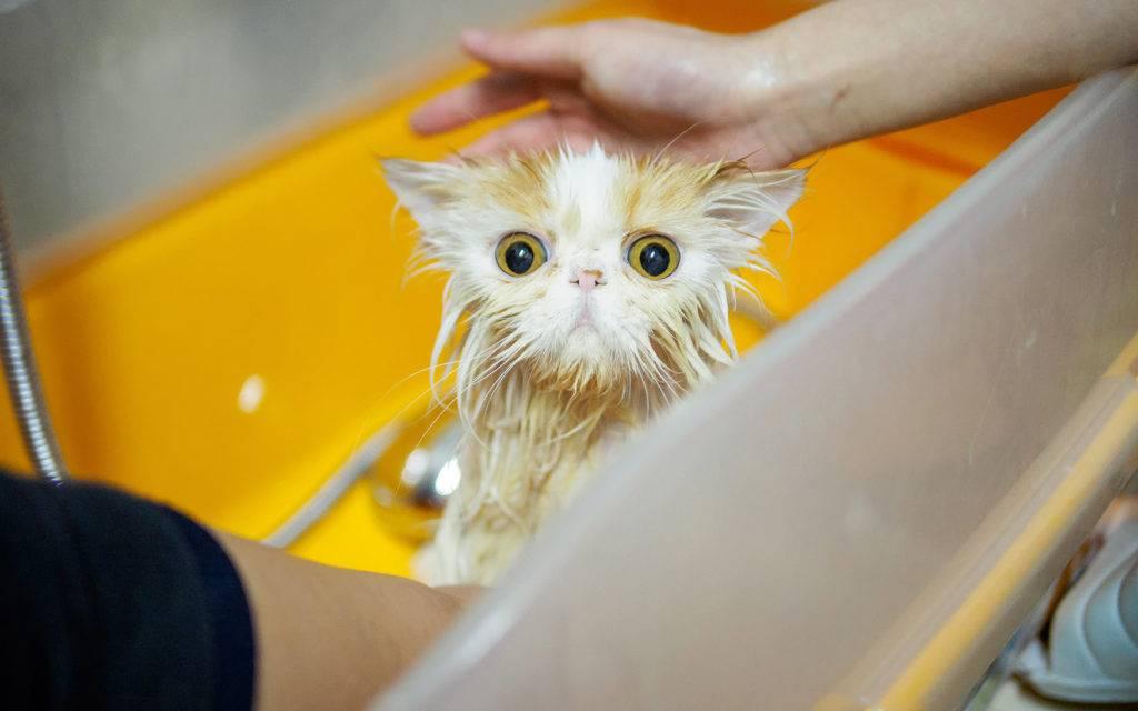 Почему кошки боятся воды — основные причины и как с этим бороться