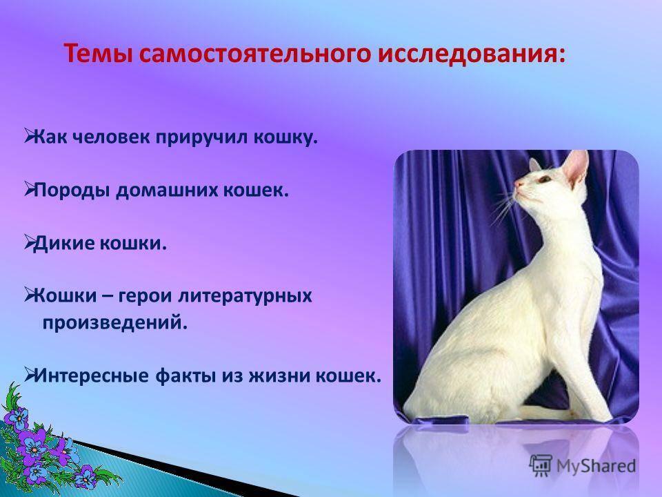 Как приручить кота? как приучить взрослую кошку к рукам? приручение дикого котенка с улицы