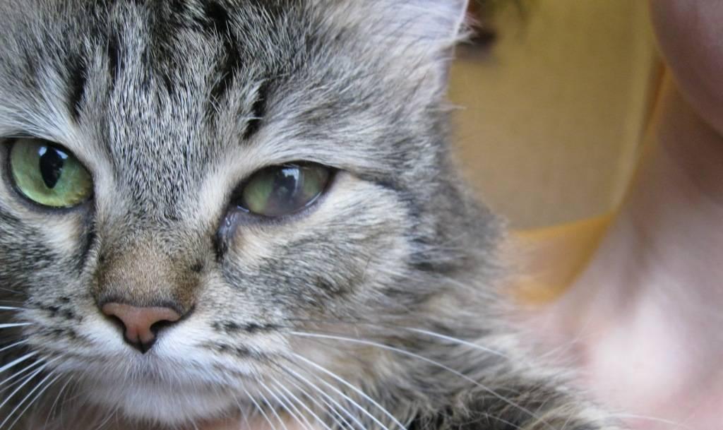 Кот щурит один глаз - zhivomag