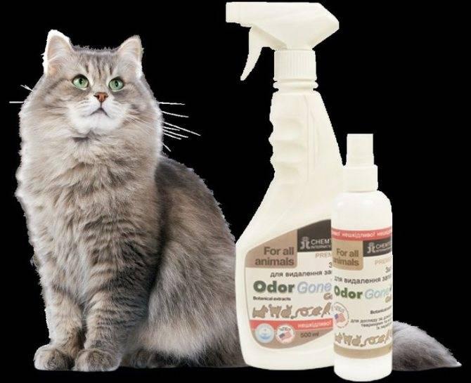 Как избавиться от запаха кошачьей мочи – только проверенные способы на все случаи