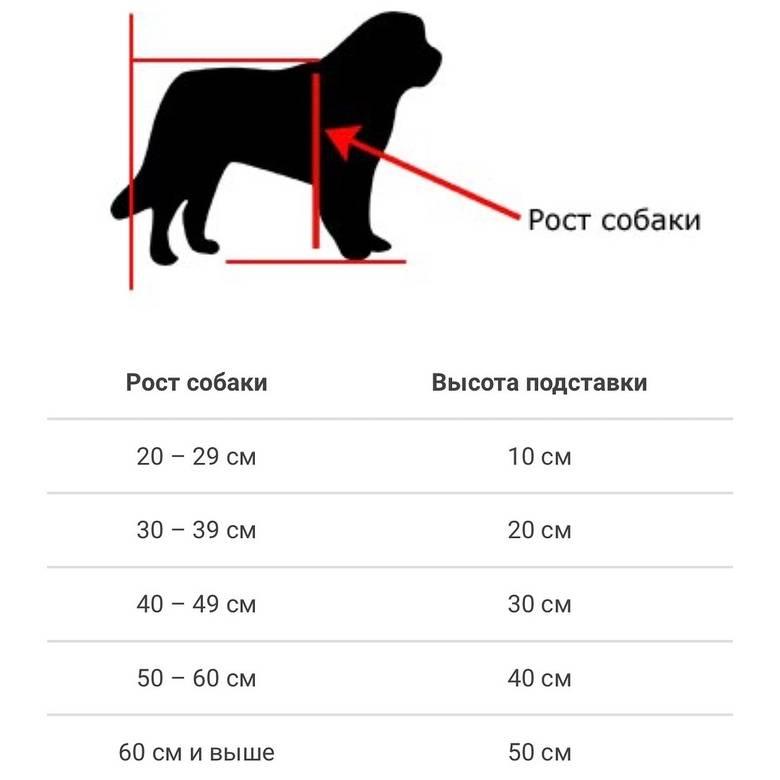 Рост и вес щенка немецкой овчарки