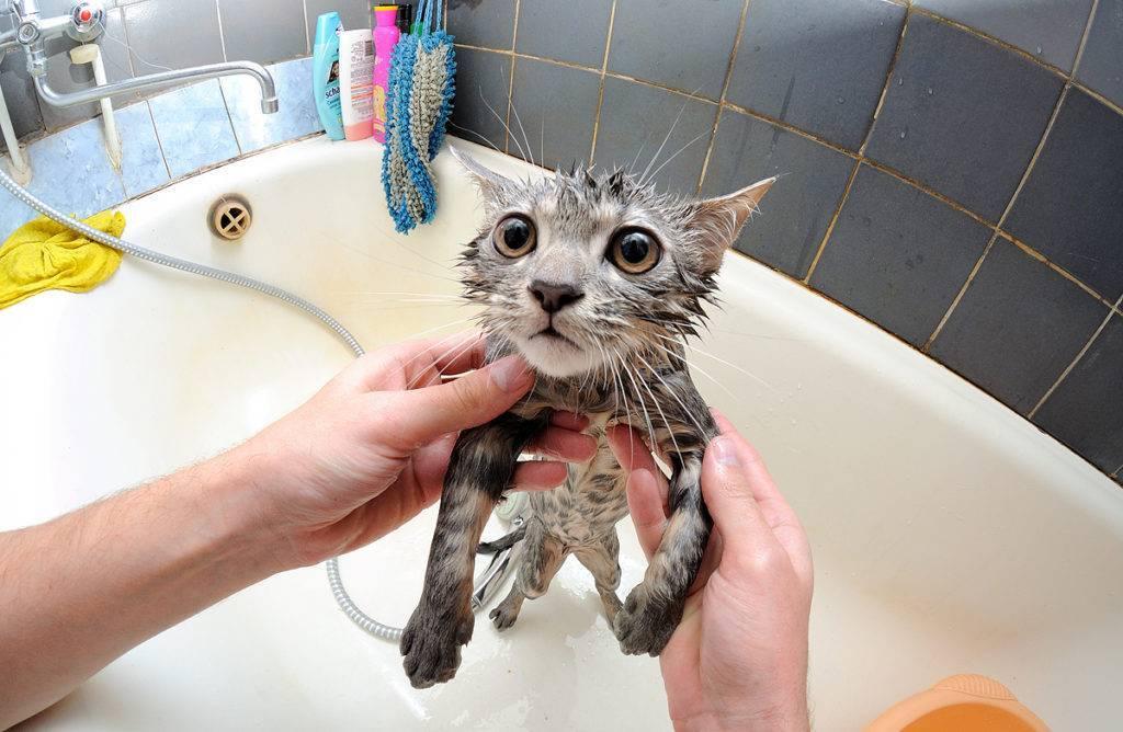 Почему кошки и коты боятся воды? страх перед водой: правда или миф?