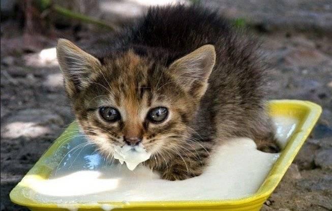 Почему домашний кот не пьет воду опасно ли это