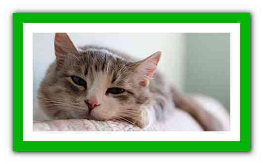Простуда у кота лечение в домашних условиях. 5 причин заболевания
