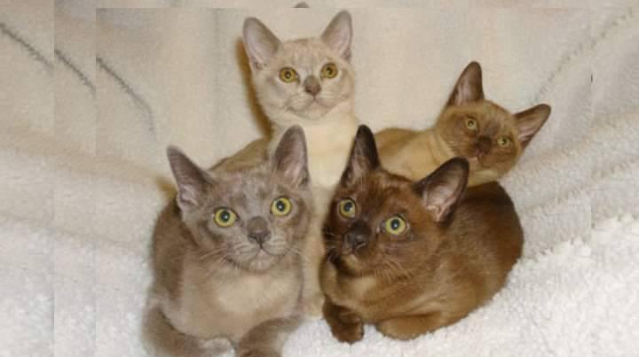 Какая кошка подойдет для детей: выбор породы для ребенка в квартиру