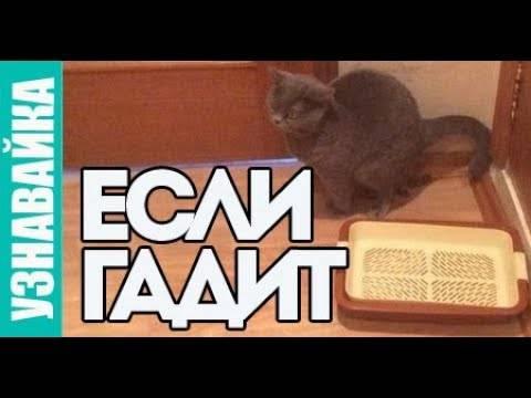 Почему кошка метит территорию во время течки и что с этим делать