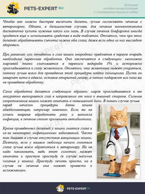 Простуда у кошек: причины, симптомы и лечение