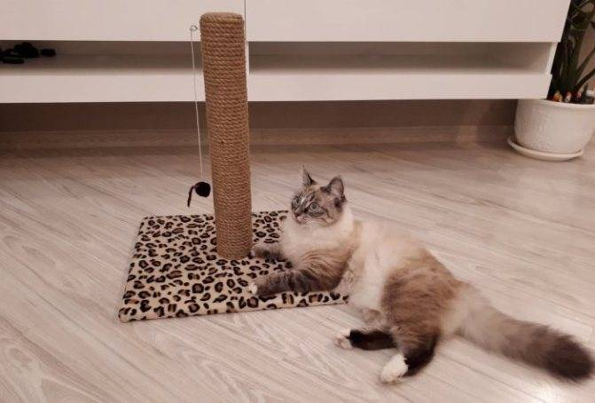 4 совета, как приучить кота к когтеточке и сохранить свою мебель целой