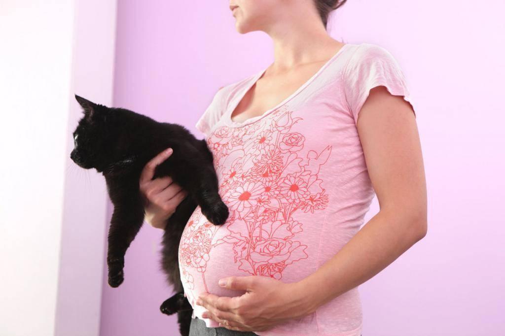 Почему кошки любят спать на человеке, ложатся на грудную клетку, грудь или живот беременной женщины?