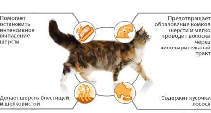 Как вывести шерсть из желудка кошки в домашних условиях: эффективные средства для удаления комков шерсти