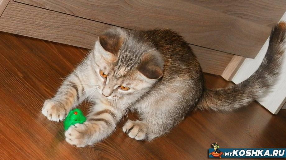 В каком возрасте кошка уже может забеременеть