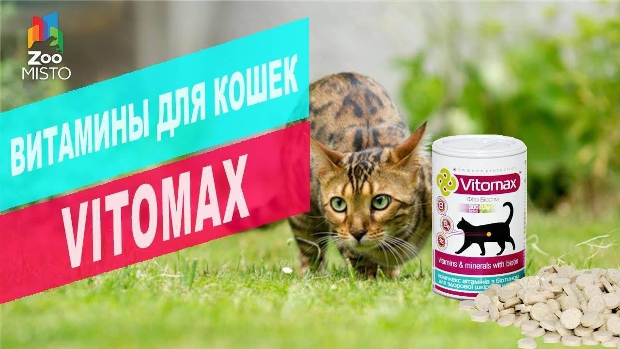 Как почистить зубы коту, кошке в домашних условиях: зубная паста, щетка