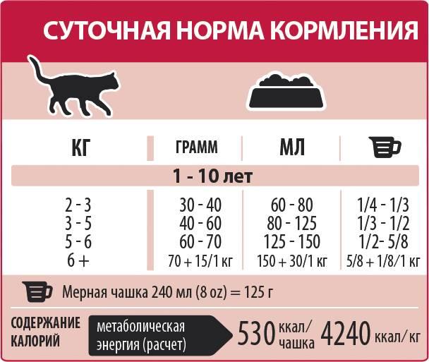 Особенности кормления пожилых кошек
