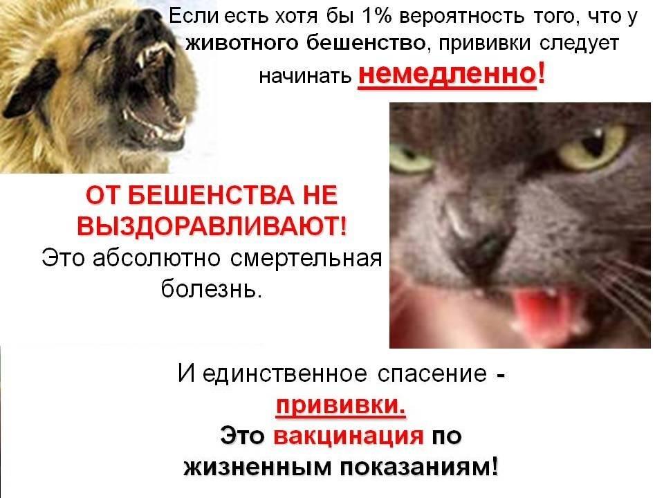 Бешенство кошек