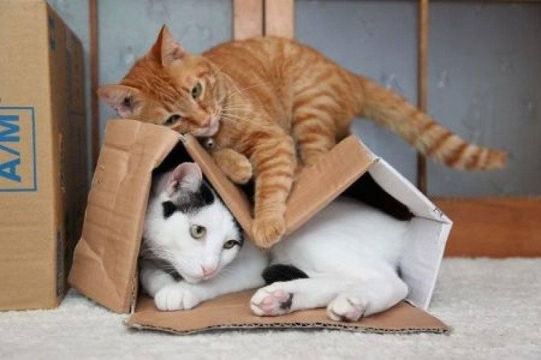 Как кошка проявляет свою любовь к хозяину: 14 главных признаков