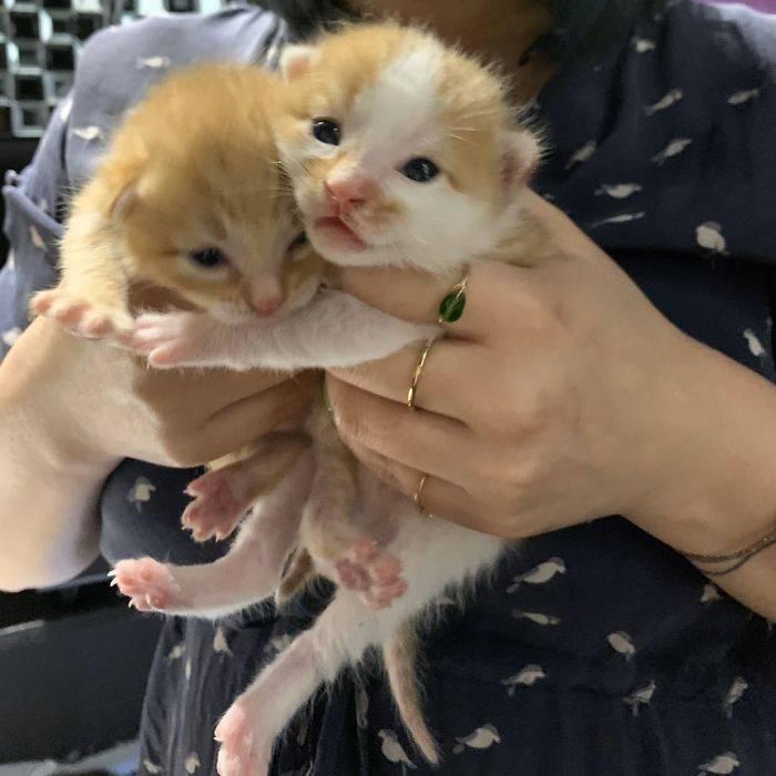 Когда котята открывают глаза после рождения? что необходимо знать владельцам