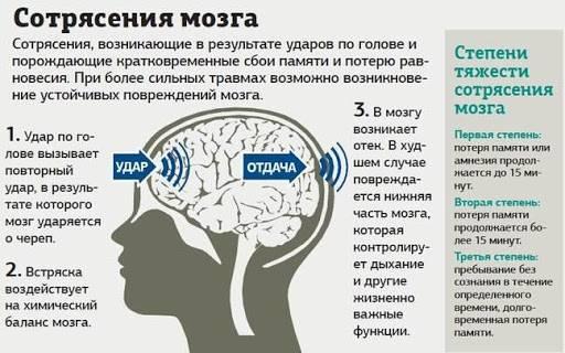 Сотрясение мозга у кошки - симптомы, диагностика, прогноз