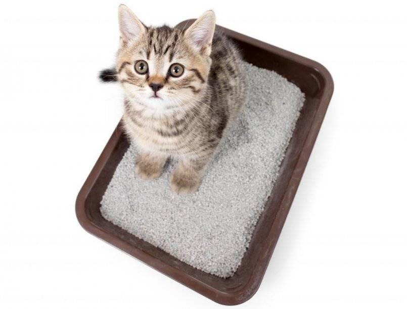 Как приучить кота и кошку к лотку
