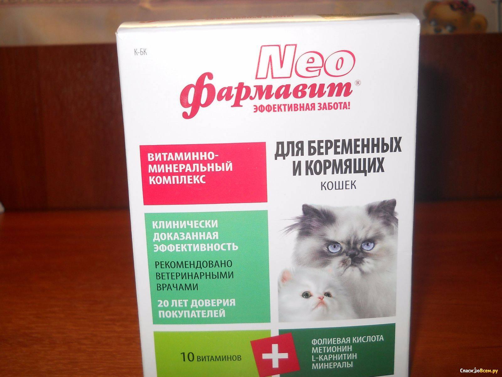 Чем кормить беременную кошку, какие витамины давать?