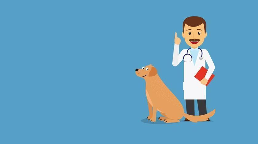 Какие прививки делают кошкам и когда?