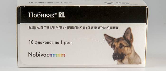 Лептоспироз у собак: симптомы и лечение