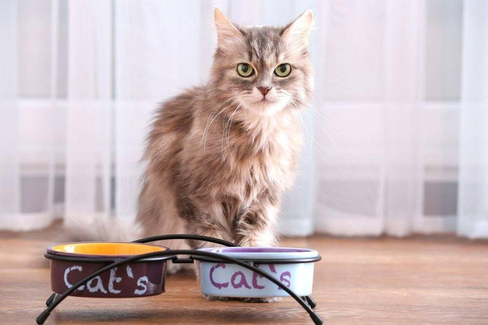 Кошка не ест, только пьет воду и спит: причины, лечение в домашних условиях