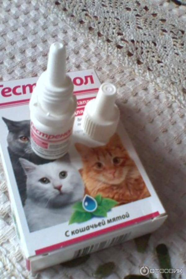 Как выбрать капли от гуляния для кошек