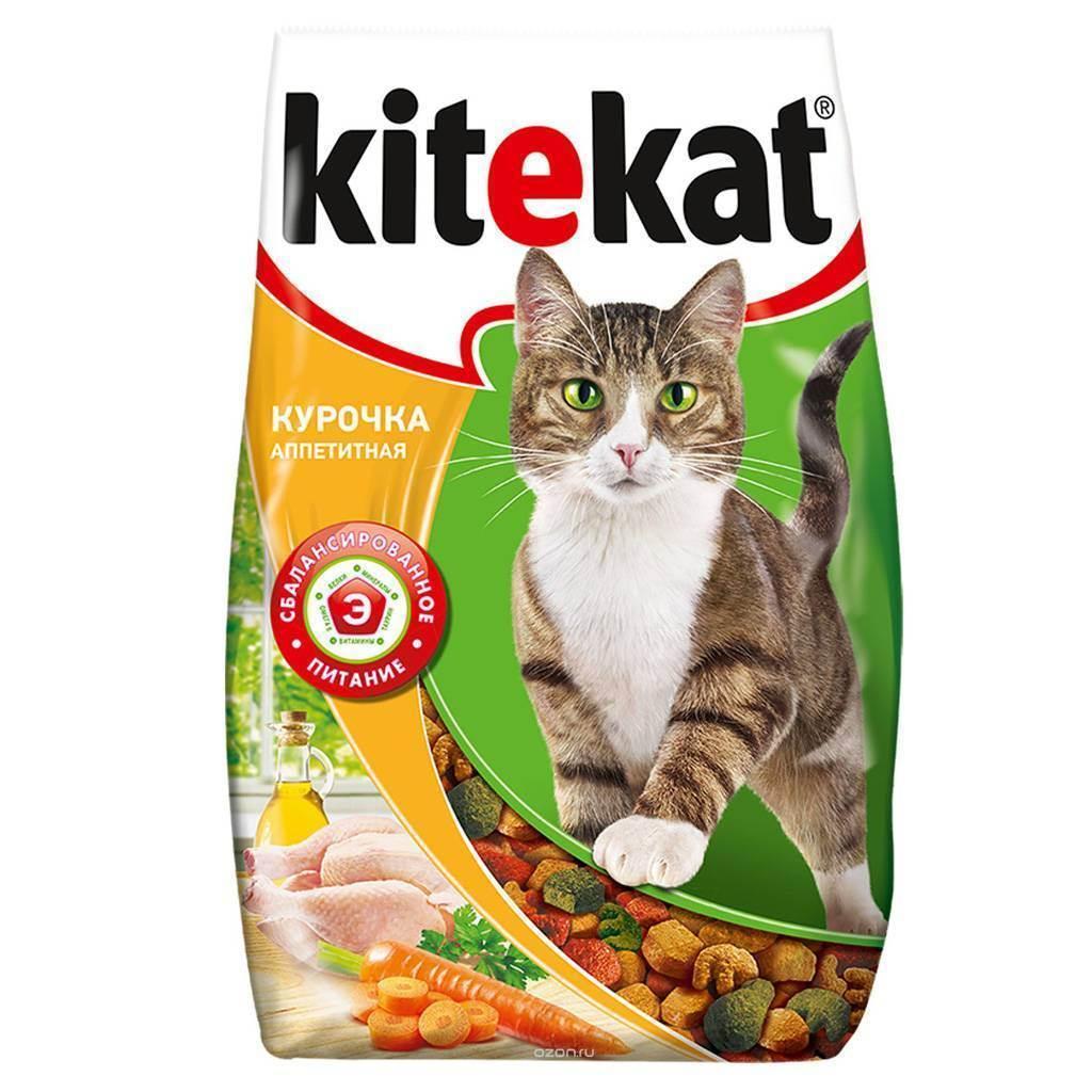 Чем кормить кошку: советы ветеринаров и рейтинг готовых кормов