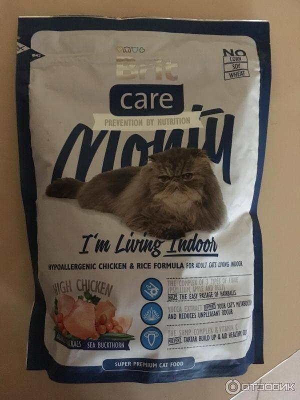 Кошка перестала есть сухой корм: почему не ест, что делать, как приучить и перевести на другой, советы ветеринаров