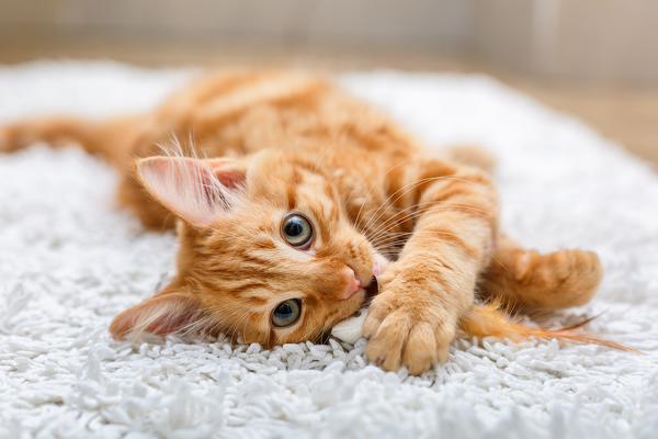 Где оставить кошек на время отпуска?