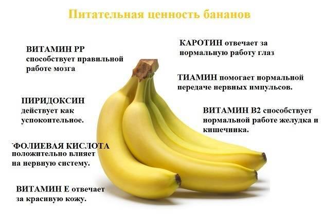 """Можно ли собаке банан? мнение ветеринаров   блог ветклиники """"беланта"""""""