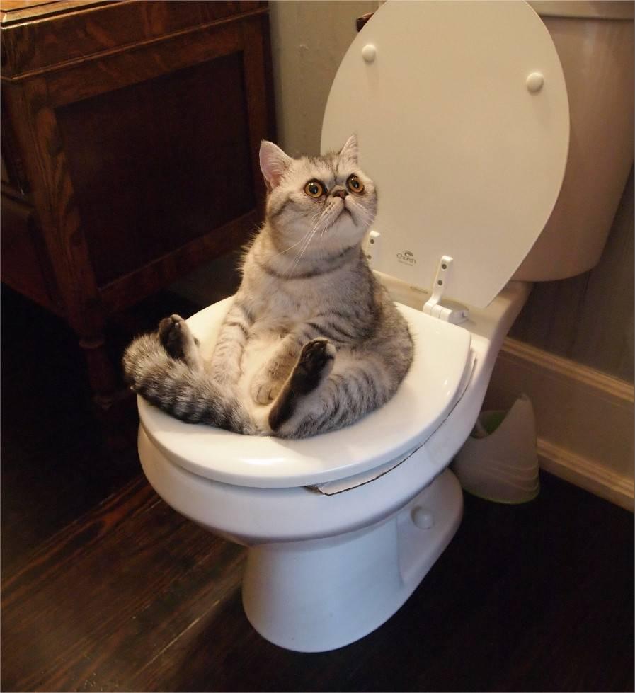 Почему кошка писает в лоток, а какает рядом с ним – причины и что делать