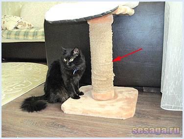 Что делать если кот или кошка все портит в доме?