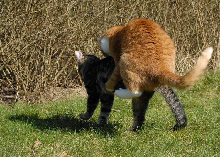Почему дерутся коты живущие в одном доме. кошачьи драки. что делать, если ваши кошки нападают друг на друга? при повреждении глаз
