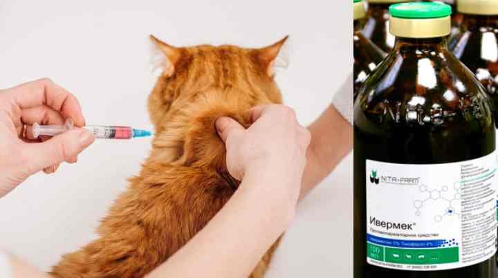 Ивермек — инструкция по применению в ветеринарии