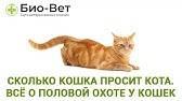 Сколько дней кошка просит и хочет кота | как долго гуляет